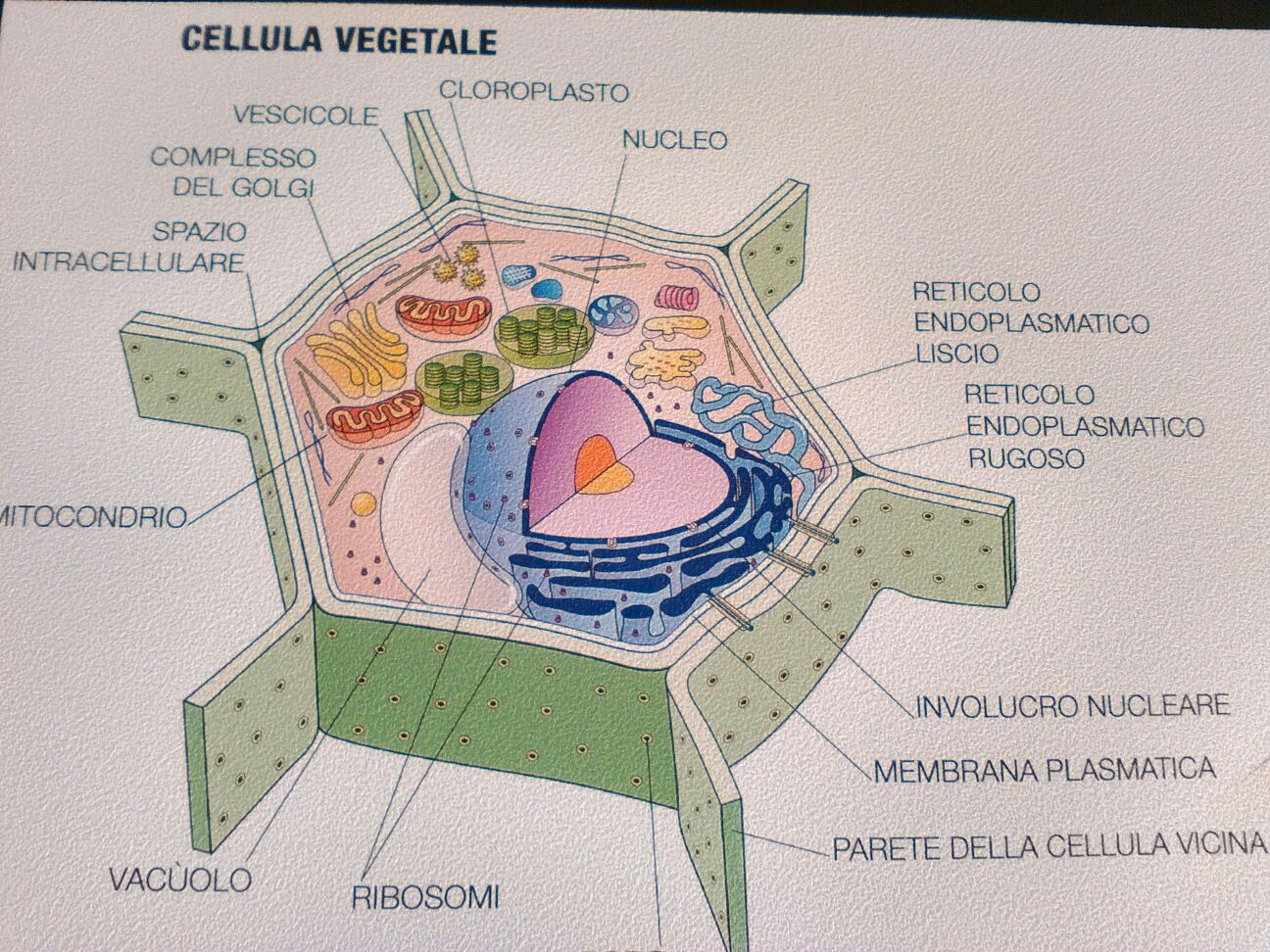3-Progetto CLIL